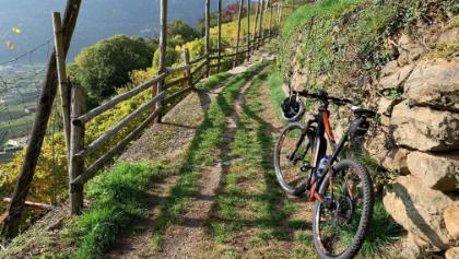 Stopp am Weinberg oberhalb von Algund