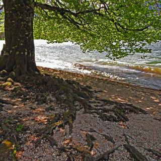 On the shore of Bohinj lake