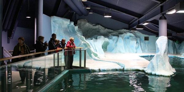 Seal pool in Polaria