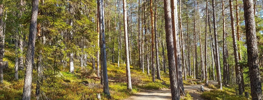 Kesänkijärven ympäri kulkeva reitti on pääosin helppokulkuista sorastettua reittiä
