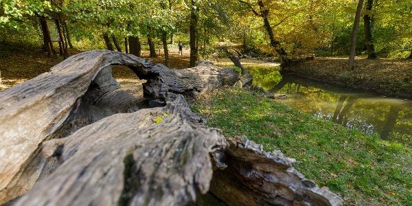 Az Ádám-Éva fa a Gaja-szurdokban