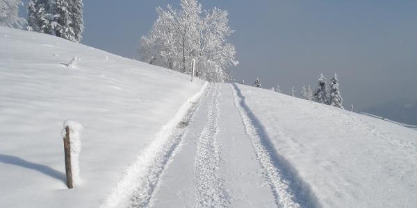 Winterwandern vom Eigenthal nach Chräigütsch