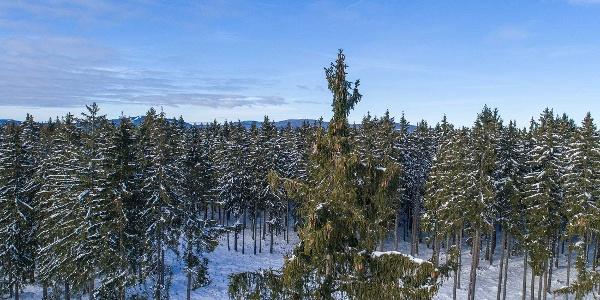 Winterlandschaft  OBEN im HARZ