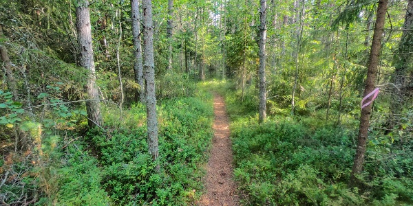 Path moving through the forest, part of the Storsand trail