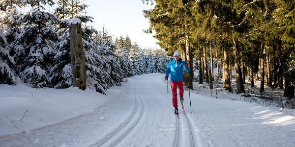 Loipe im Skilanglaufzentrum Westfeld