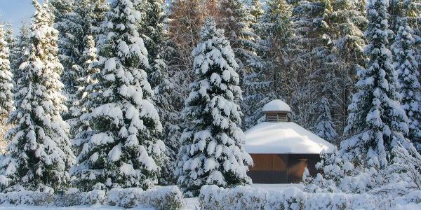 Grillhütte auf der Waldschneise