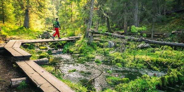 Varkaankurun polku kulkee Varkaankurussa pitkospuita pitkin vehreän puron vartta. Rajoitusvyöhyke: Reitiltä ei saa poistua!
