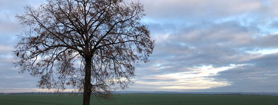 Blick auf den fernen Harz