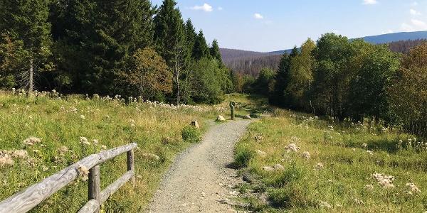 Weg von Torfhaus zum Brocken
