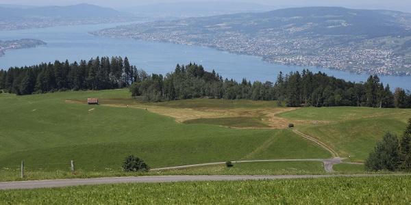 Blick auf den Zürichsee