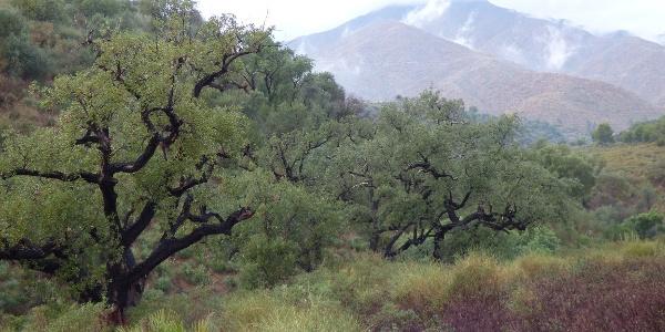 Valle de las Colmenas