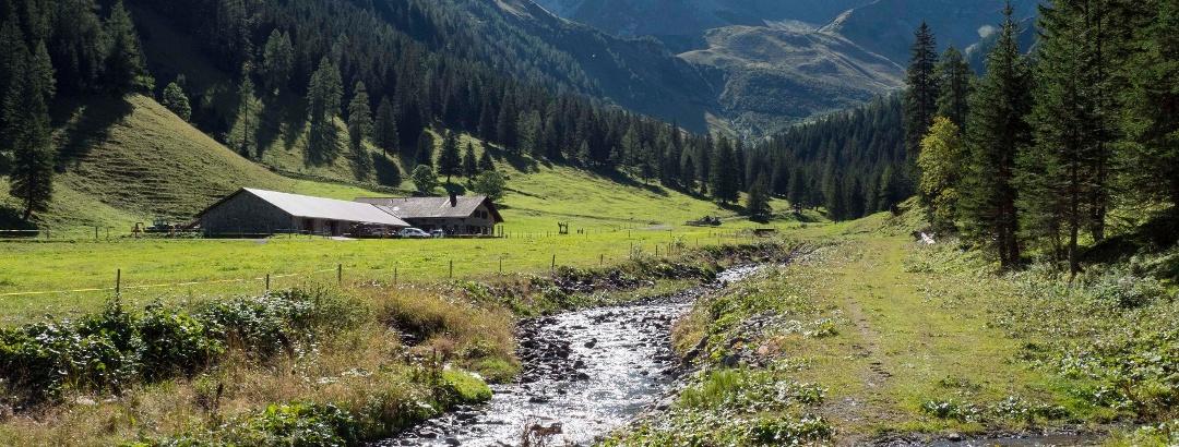 Alp Valüna in Steg