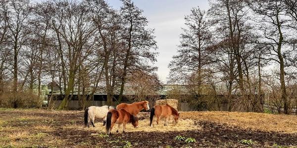 Paarden langs de Winkeldijk