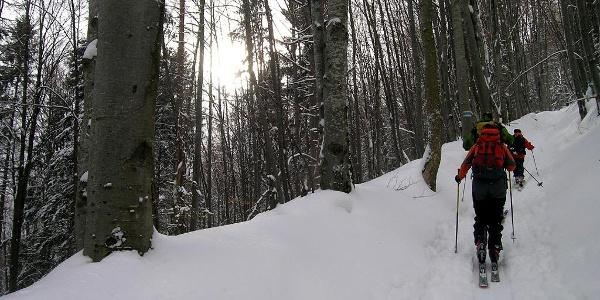 Hochstaff: Waldaufstieg nach der Lichtung mit dem Solleneck-Hof