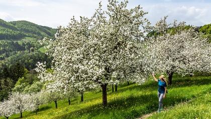 Blütenwanderung im Granitztal
