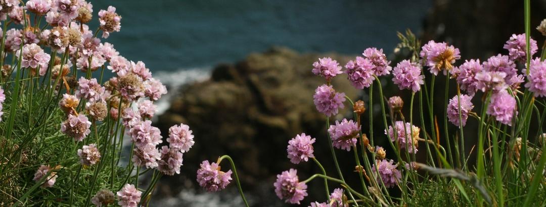 Wilde Küste Schottlands