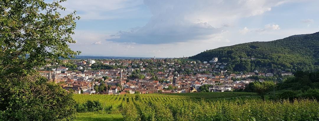 Wandermenü Pfalz - Blick vom Pfälzer Weinsteig auf Deidesheim