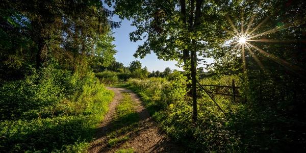 Im Tiengener Bürgerwald