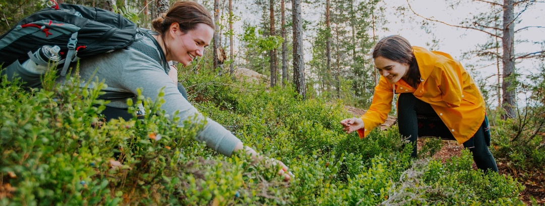 Picking Berries in Finnish Lakeland