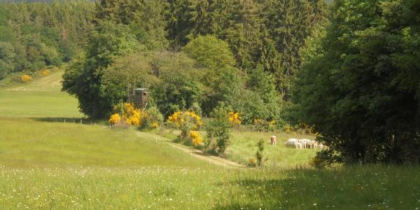 Ausblick (2) in Richtung Wershofen