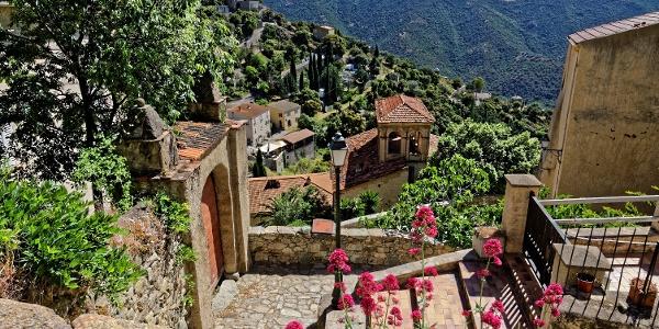 Lama, Korsika