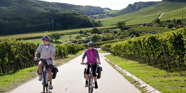 Weinradeln – Wege durch die Weinberge