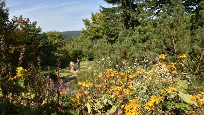 Botanischer Garten Schellerhau