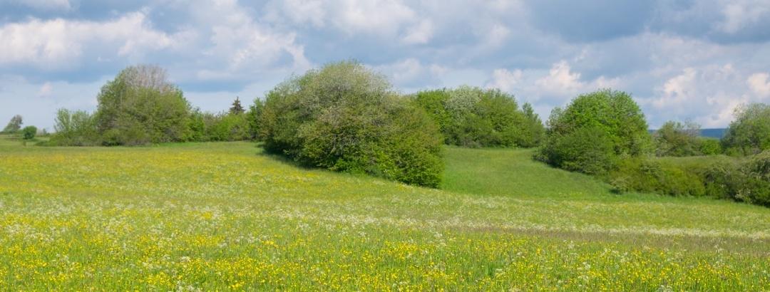Naturschutzgebiet Ochsenberg-Litzelstetten