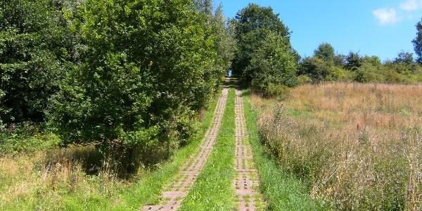Kolonnenweg - Grenze zu Thüringen