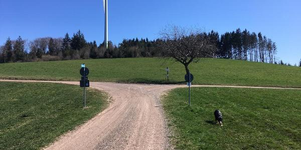 Hier trifft der ZweiTälerSteig auf den Kandel Höhenweg. Wir gehen hier links auf dem Kandel Höhenweg zurück zum Wanderheim