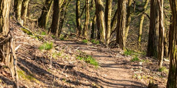 schmale Pfade durch wilden Wald
