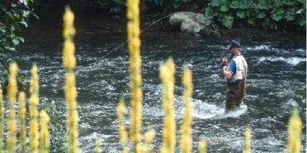 Fischen im ApfelLand