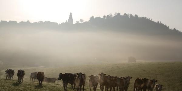 Blick auf Eversberg im Morgengrauen