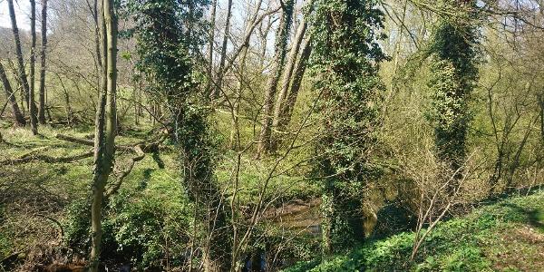 TERRA.track Stirper Berg - Schmalerberg in der Nähe der Leckermühle