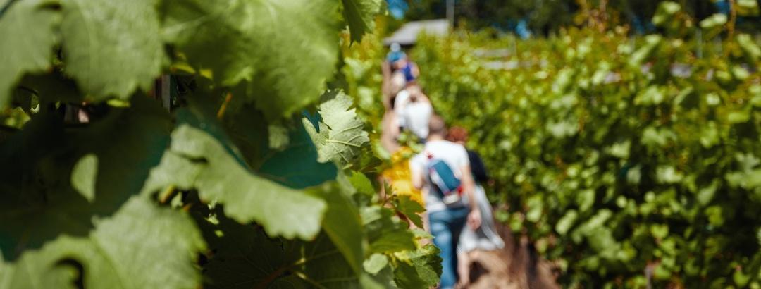 Weinwanderung