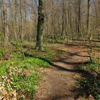 Bis Bachern ist man warm gefahren. Nach einem kurzen Abstecher durchs Wohngebiet in Bachern geht es gleich wieder in die Natur.