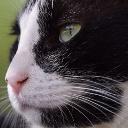 Profilbild von r djrenato81200