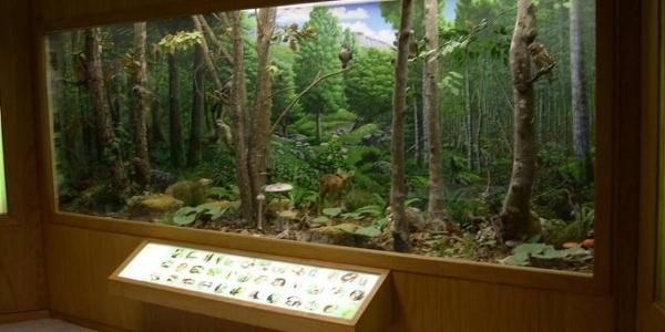 Museo Naturalistico Didattico Patrizio Rigoni
