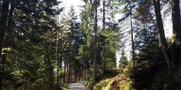 Erster Wegabschnitt auf der Forststraße