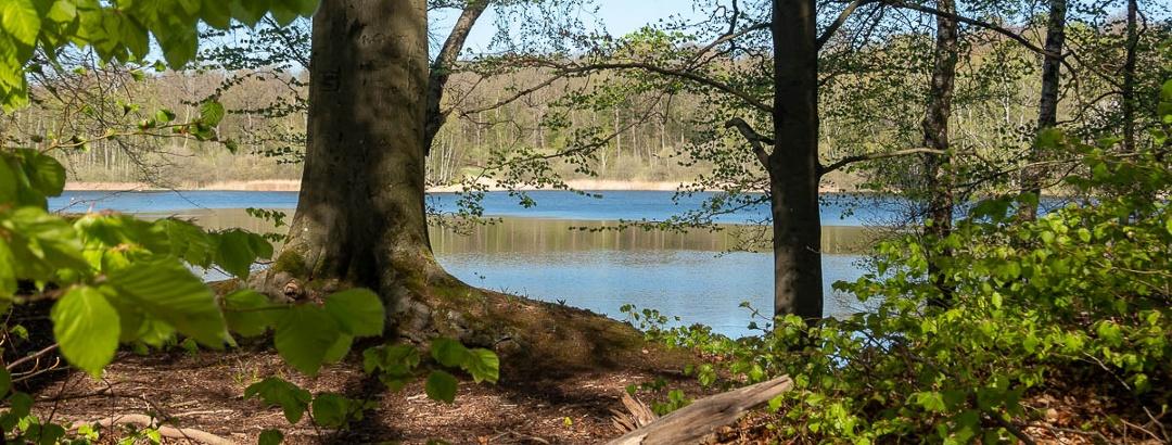 morgens am Teich