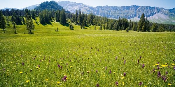 Moorlandschaft mit bunten Blumen verzaubern zwischen Rossweid und Salwideli