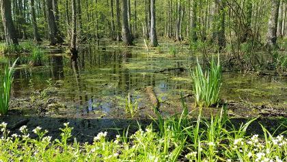 Sumpf-Landschaft beim Wasserschloss
