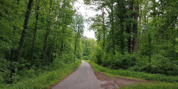 Radweg durch den Bienwald bei Neuburg am Rhein