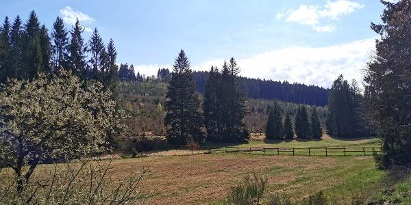 Einstieg in die Wanderroute, mit Blick auf die Wiesenflächen vor dem Bachlauf Elberndorf.