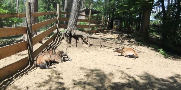 Tiergehege im Vogel- und Tierpark Abensberg