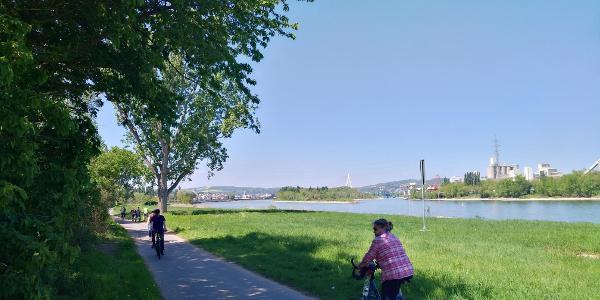 Radweg  am Rhein bei Weißenthurm