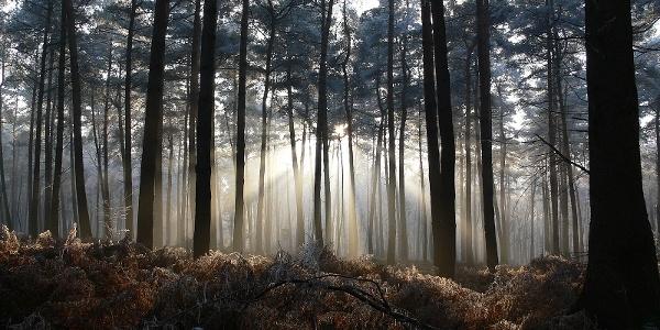 Schleifenroute - Sonnenschein im Wald Leucht