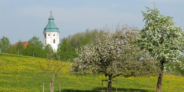 Grünkraut - Wiese mit Kirchturm im Hintergund