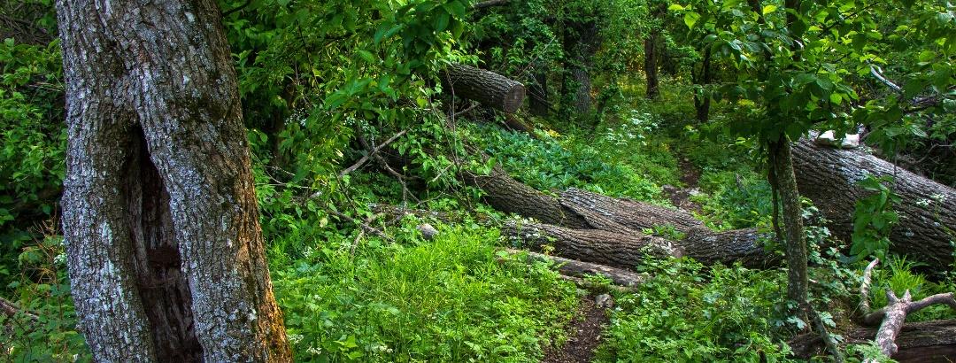 A Vár-hegy tetején az erdőrezervátum magterületén túrázunk