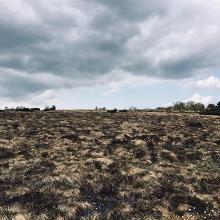 hochmoor / hornisgrinde / schwarzwald
